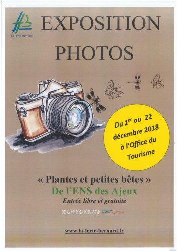 Exposition photos «PLANTES ET PETITES BÊTES»